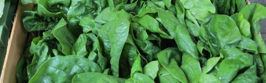 Spinat versorgt mit Eisen