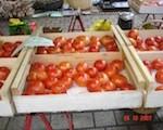 tomatenkiste-160-120